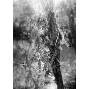 wati creek