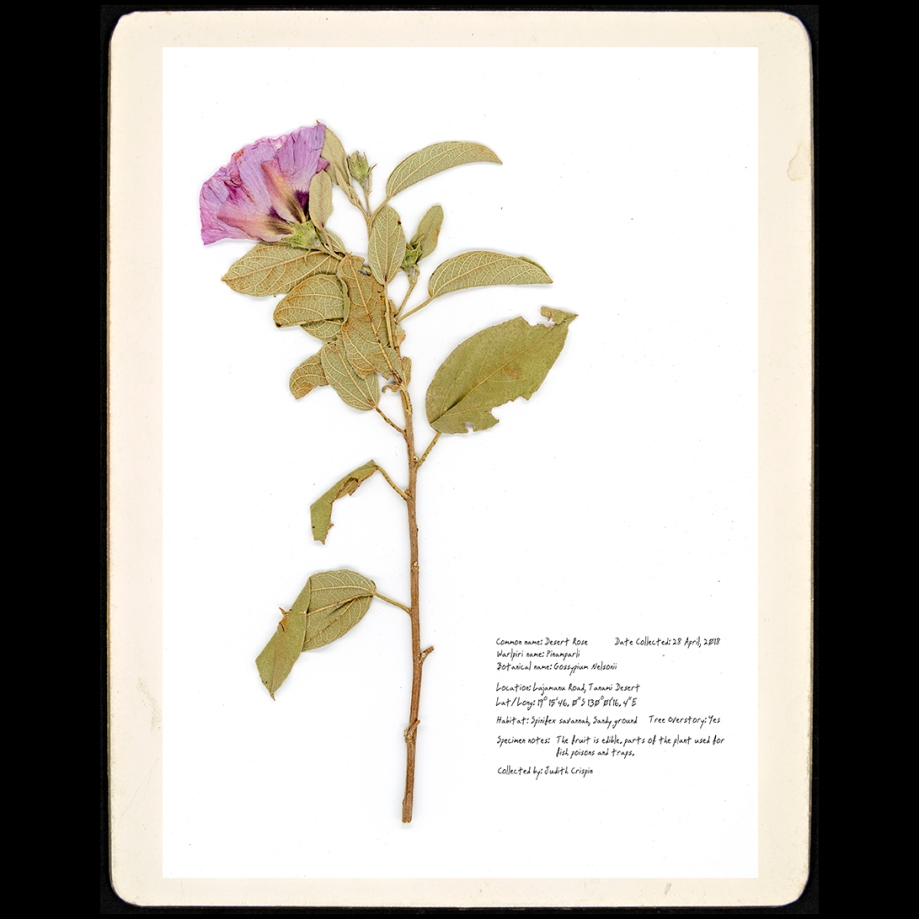 desert rose (small)