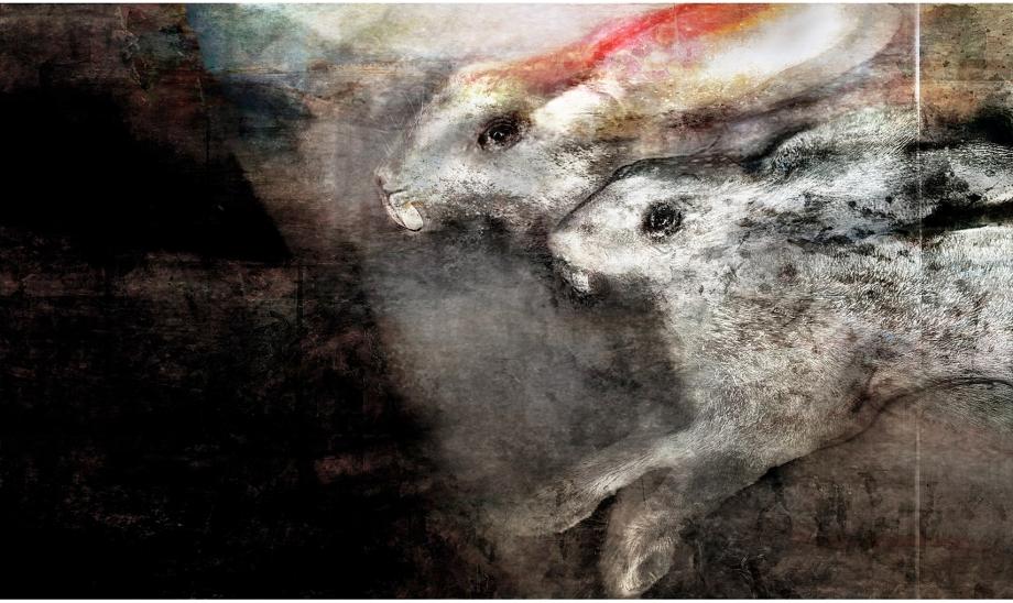 double-bunny.jpg