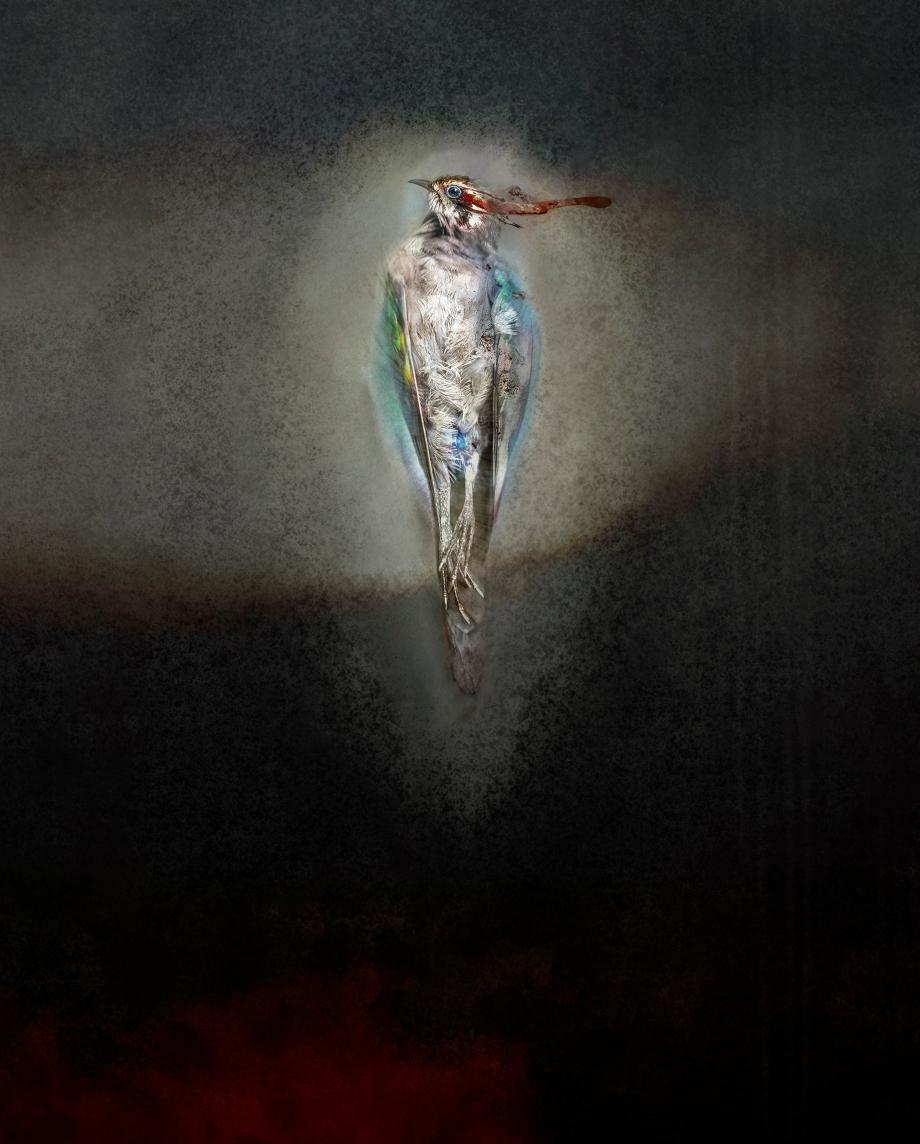 horsfield's bronze-cuckoo3