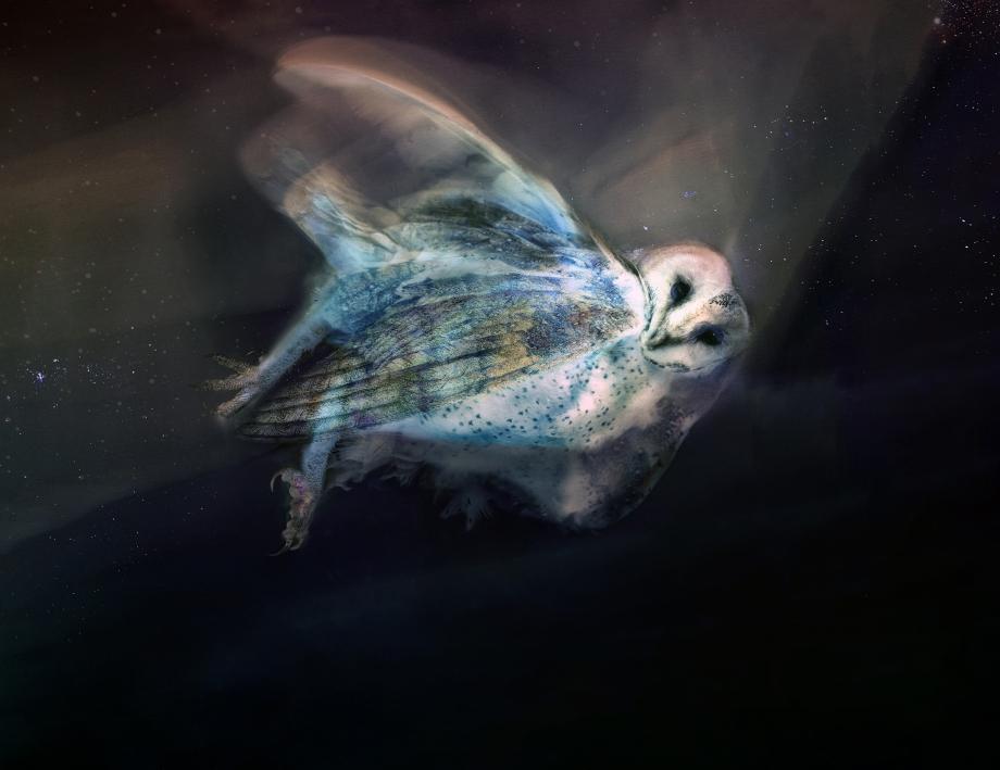 masked owl lumen 3