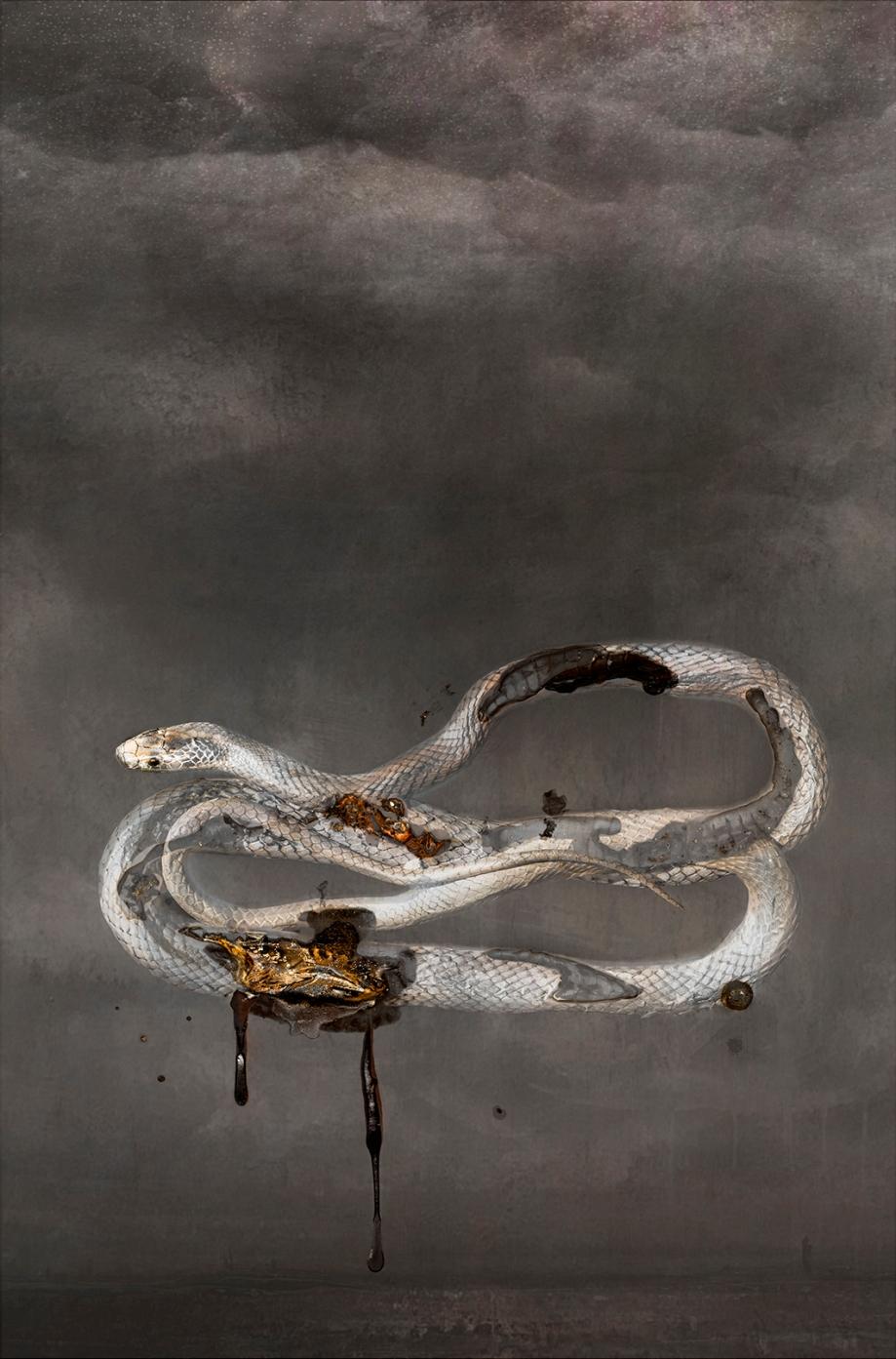 snakelittle