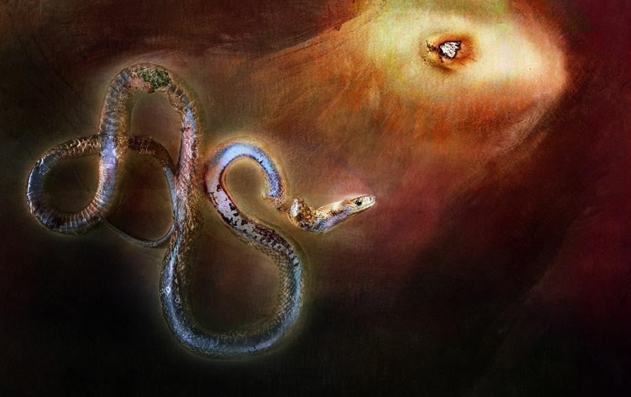 Helene snake