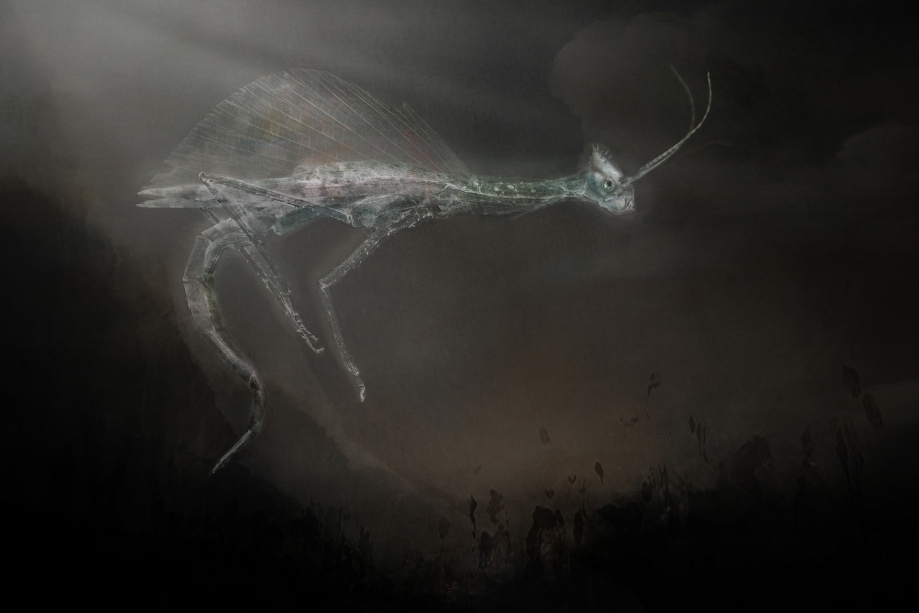 fairy insect 2