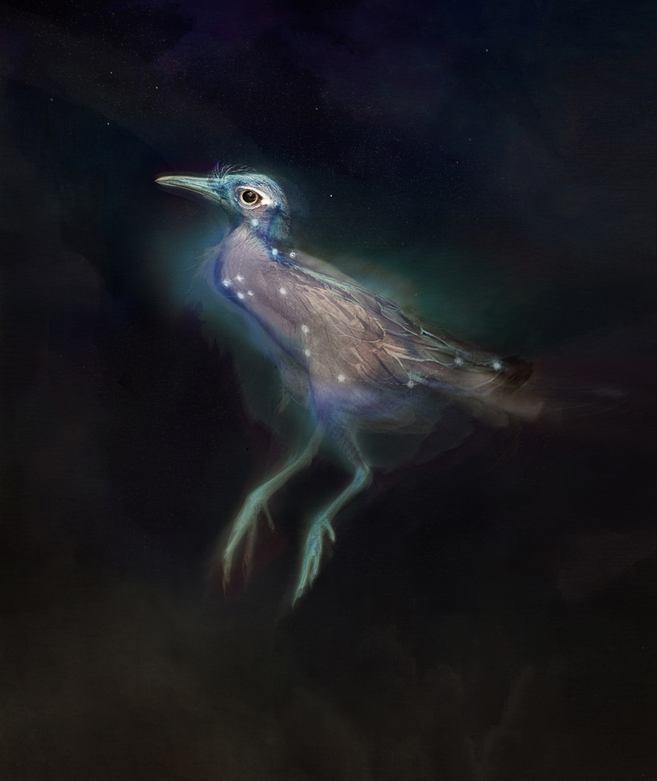 waterbird2